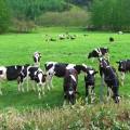 中札内村大規模草地育成牧場