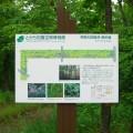 共栄の防風林遊歩道