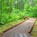 上札内自然観察園