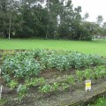 豆畑農園、台風の被害を受け...